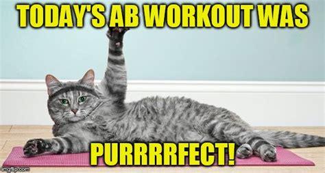 Cat Gym Meme - exercise cat imgflip