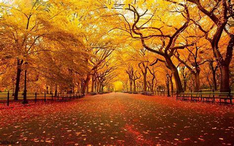 Fall Desktop Backgrounds Autumn Wallpaper by 42 Autumn Backgrounds 183 Free Stunning Hd