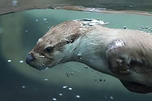 Wiesel Marder Unterschied : royalty free photo photography of black and white sea lion on body of water pickpik ~ Frokenaadalensverden.com Haus und Dekorationen