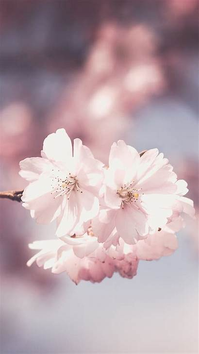 Pink Flowers Wallpapers Flower Phone Iphone Mobile