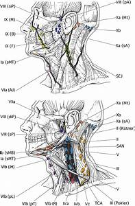 Delineation Of The Neck Node Levels For Head And Neck