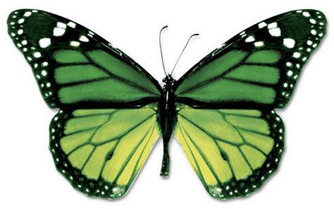 bradbury wing groene foto vlinder afbeeldingen groene foto vlinder