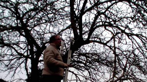 alten apfelbaum schneiden schneiden im garten 2011 apfelhochstamm 4v6