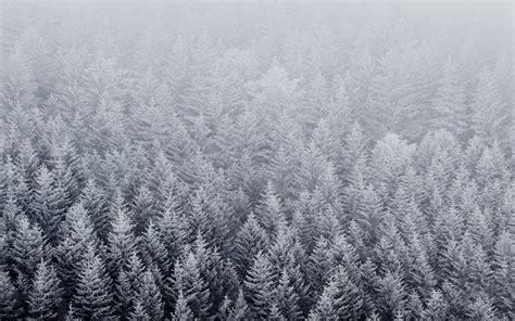 Download Snow Trees Iphone 6 Wallpaper Wallpaper