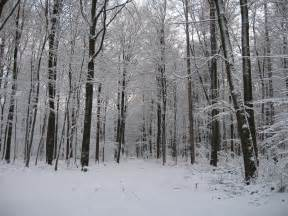 Dark Snowy Forest