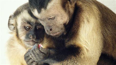 Moral Behavior In Animals Frans De Waal Youtube
