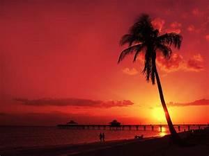 Romantic Sunset by Melanie Viola