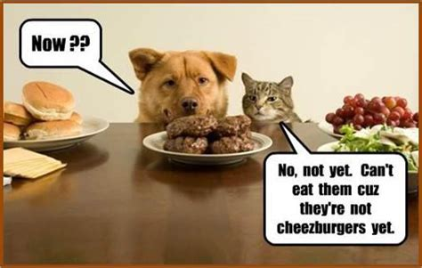 Dog Cat Meme - dogs and cats amazing memes