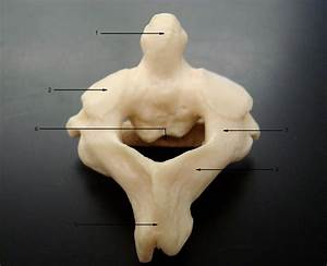 Level 3 - Skeletal Anatomy