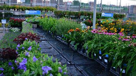 walmart garden center waterpulse irrigation mats installed in wal mart garden