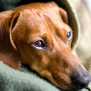 what medicine do dogs take for kennel cough
