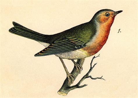 bırds on pinterest bird art bluebirds and catherine klein