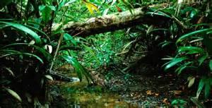 Amazon Rainforest Floor | The Amazon Rainforest