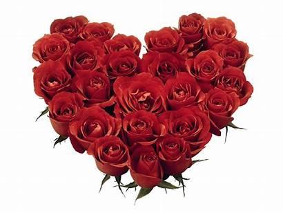February Heart Flowers Flower Shaped Roses Desktop