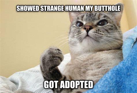 Cat Meow Meme - livememe com success cat