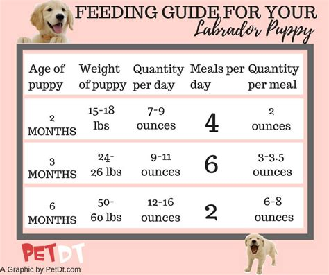 labrador puppies weight chart exploredogscom