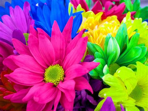 Flowers Wallpapers Colourful