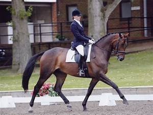 Absorbine UK Blog: Top tips for dressage turnout with ...