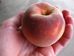 The Herbangardener » Growing Fruit Trees From Seed: Peach ...