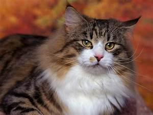 Pin Koty Domowe I Ich Wpadki on Pinterest