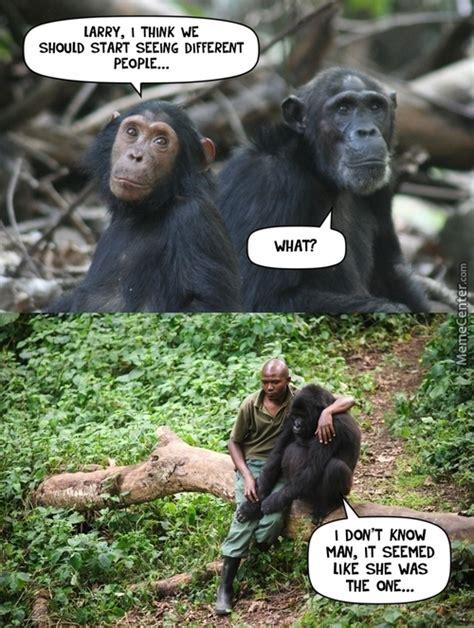 Chimp Meme - chimp memes best collection of funny chimp pictures