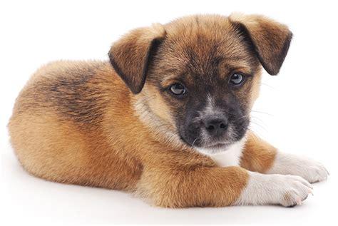 Cute Little Dogs  Wwwpixsharkcom  Images Galleries