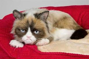 grumpy cats grumpy cat to join cast of broadway musical cats