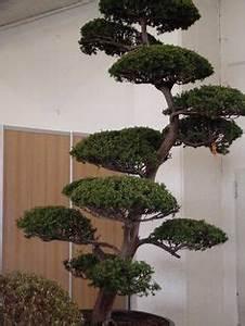 lagerstroemia indica indische lagerstromie kreppmyrte With garten planen mit bonsai azalee