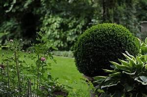 Bux Schneiden Wann : buchsbaum in form schneiden ber ideen zu buchsbaum ~ Lizthompson.info Haus und Dekorationen