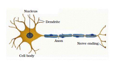 tissue responsible  movement   body