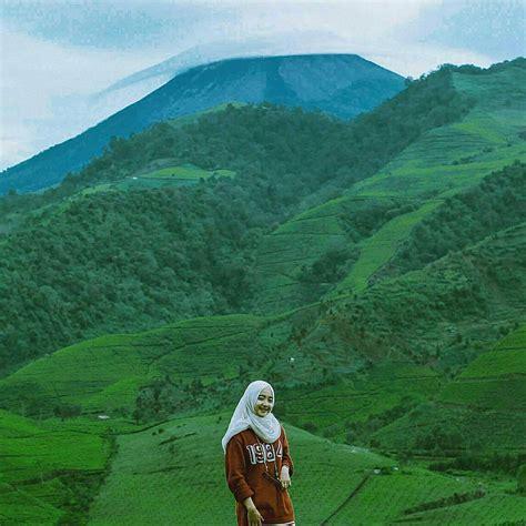 deretan kebun teh  indonesia  indahnya kayak  eropa