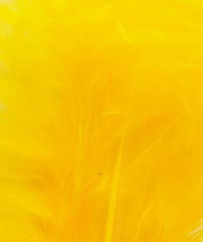 Yellow Colour - Best, Cool, Funny