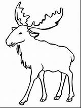 Moose Drawing Coloring Pages Getdrawings sketch template