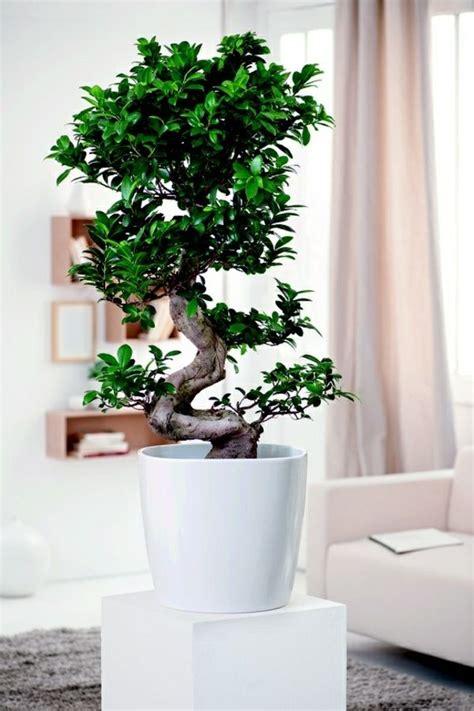Zimmerpflanzen Feng Shui by Feng Shui Zimmerpflanzen Wohn Design