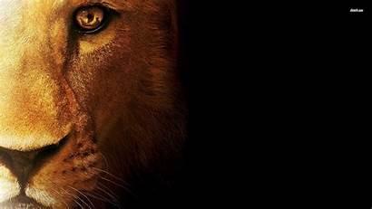 Lion Lions Wallpapers Detroit Face Desktop Screensavers