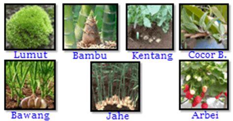 perkembangbiakan hewan tumbuhan