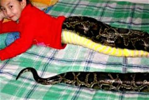 visit  thailand snakegirl attracts tourist paperblog