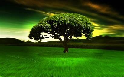 Wallpapers 1080p Cool Widescreen Tree 8k 3d