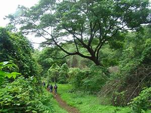 The 25+ best ideas about Sanjay Gandhi National Park on ...