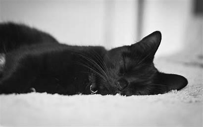 Cat Macbook Wallpapers Pro Inch Mac Retina
