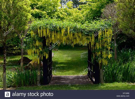 Gelben Goldregen Blumen Blumen Blütentrauben Decken