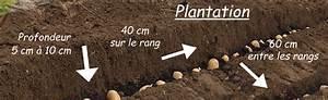 Période Pour Planter Les Pommes De Terre : mon jardin ~ Melissatoandfro.com Idées de Décoration