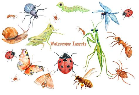 Watercolor Insects And Spider  Illustrations  Creative Market