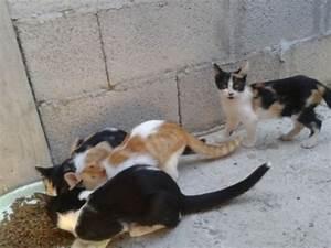 cucciolissimi org Cucciolissimi Sardegna Sei Piccoli Gattini Abbandonati In Una Siepe Cercano