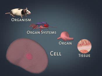 levels  organization  organisms