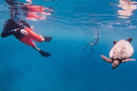 Maldives Underwater Initiative's Junior Marine Biologist ...