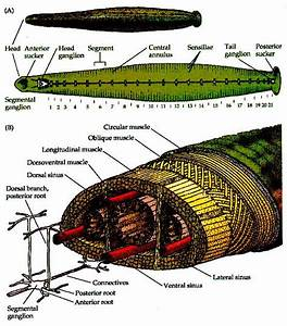 8) Anatomy