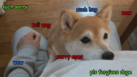 Wow Meme - sorry doge gif find share on giphy