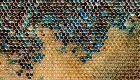 trypophobia  unusual fear  holes feature tempoco