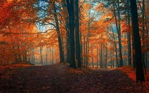 Landscape, Nature, Fall, Path, Forest, Crossroads, Leaves, Trees, Mist, Colorful, Wallpapers, Hd